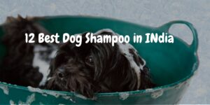 Top 12 Best Dog Shampoo In India (April 2021)